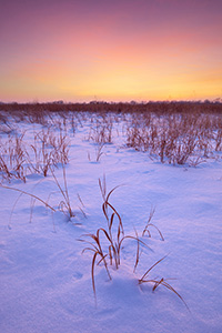 Sunset comes across the cold prairie at Boyer Chute National Wildlife Refuge.  A recent snowfall left a soft, white blanket across the landscape which reflects the warm hues of the setting sun. - Nebraska Landscape Photograph