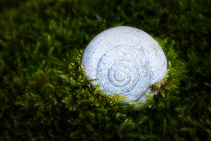 A small snail shell rests on the bottom of the forest captured by the surrounding growth. - Nebraska Photograph