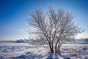 On a frigid day a couple of years ago, fog hung over eastern Nebraska. When it left all the trees and grass were beautifully crystalized with hoarfrost. - Nebraska Landscape Photograph