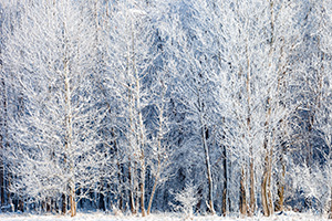 A landscape photograph of hoarfrost on a forest at Chalco Hills Recreation Area, Nebraska. - Nebraska Landscape Photograph