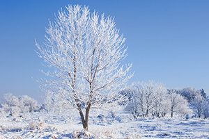 The trees are outlined with a layer of frost throughout Chalco Hills Recreation Area in eastern Nebraska on a frigid February morning. - Nebraska Photograph