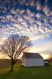 On an early spring evening in western Iowa, I photographed the sun setting behind an abandoned rustic barn and homestead which illuminated the nearby budding tree. - Iowa Photograph