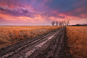 An early spring rain drenches the prairie landscape, creating reflective puddles in a newly plowed road. - Nebraska Photograph