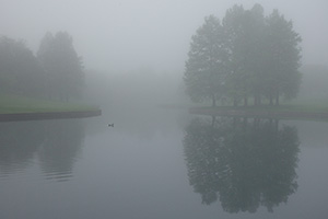 A quiet morning by a small pond near the Gateway Arch. - Missouri Photograph