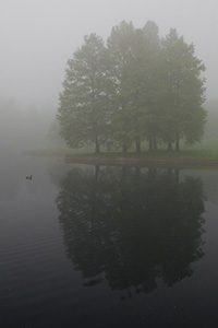 Alone by a small pond near the Gateway Arch, only a single duck for company barely visible through the fog. - Missouri Photograph