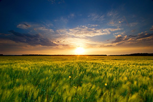 Taken right before sunset on a wheatfield in DeSoto Bend National Wildlife Refuge. - Nebraska Photograph