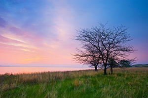 The spring rains often make the sandhill region of Nebraska a verdant green. It is one of my favorite times to become lost in the sea of grass in the central part of the state. On this beautiful morning I wandered out to North Marsh Lake in the Valentine National Wildlife Refuge and waited as the sun rose on the distant horizon illuminating the clouds in pastel pinks, oranges, and purples. - Nebraska Photograph