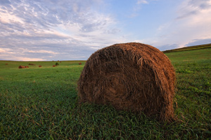 On a cool, early summer's morning, dew and sunlight kiss recently baled hay on a field in northwestern Nebraska. - Nebraska Photograph