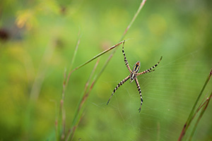 A spider climbs in his web in the morning sun at Ponca State Park. - Nebraska Photograph