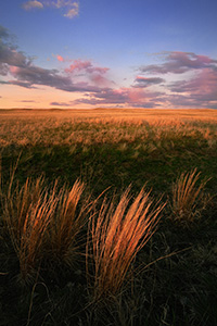 Prairie grass, visible from the foreground to the hills of the sandhills, glow amber from light of the setting sun. - Nebraska Photograph