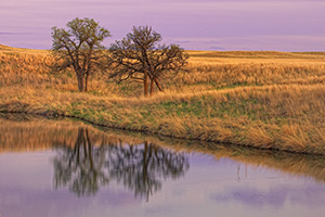 Here, two trees stood for an eternity, alone on a vast empty prairie yet they remain together. For me, this photograph evokes a calming feeling, one of togetherness and companionship. Two united against the elements and time. - Nebraska Photograph