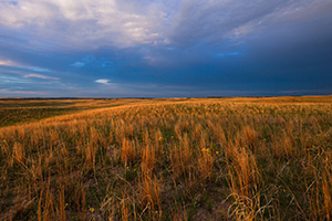 Dark clouds hover over the rolling sandhills in McKelvie National Forest as the last light of the setting sun illuminates the prairie grasses. - Nebraska Photograph