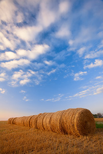 Puffy clouds form in the late evening above a row of hay bales in eastern Nebraska. - Nebraska Landscape Photograph