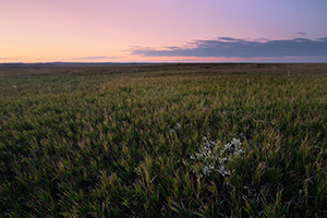 The warm glow of the recently set sun illuminates a grassland in Badlands National Park in South Dakota - South Dakota Photograph