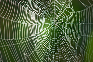 Morning dew clings to a spiderweb at Ponca State Park in northeastern Nebraska. - Nebraska Photograph