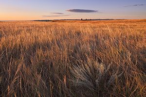 At Wind Cave National Park in South Dakota prairie grass as far as the eye can see glows from the early morning sun. - South Dakota Photograph