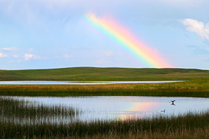 A rainbow appears reflected in a small lake after a storm in the Sandhills of Nebraska. - Nebraska Photograph