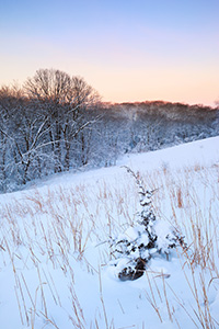 Snow glistens in the early morning light as dawn comes to Neale Woods Forest. - Nebraska Landscape Photograph