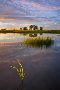Late afternoon sun in early September shines through some grass in the Frank Shoemaker Marsh near Lincoln, Nebraska. - Nebraska Photograph