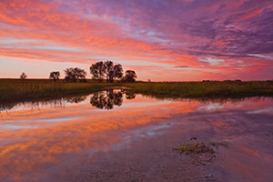 A beautiful sunset reflects off a saltwater marsh in eastern Nebraska near Lincoln. - Nebraska Photograph