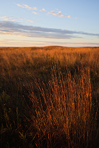 Priarie grasses burn bright red in the rising sun at Valentine National Wildlife Refuge, Nebraska. - Nebraska Photograph
