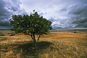 A lone tree watches over the vast prairie while a storm brews on the horizon in the Sage Creek area at Badlands National Park in South Dakota. - South Dakota Landscape Photograph
