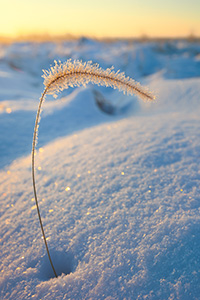 Ice coated grass pokes out from the recent snow at Boyer Chute National Wildlife Refuge. - Nebraska Landscape Photograph