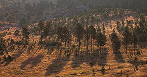 The Black Hills in South Dakota are known for their tall pine trees that cover the hills as a dark blanket. - South Dakota Photograph