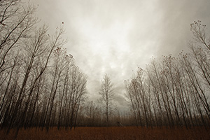 Trees stand at Boyer Chute National Wildlife Refuge on a melancholy winter evening. - Nebraska Photograph