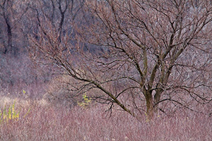 A tree fresh from the autumn fall stands naked near DeSoto lake. - Iowa Landscape Photograph