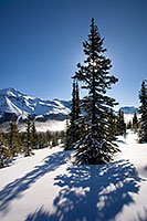 Near the Peyto Lake overlook, a recent snow covers the ground while the sun shines through a large pine tree. - Canada Photograph