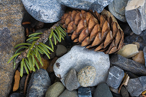 A pine cone and some rocks create a collage of small patterns. - Canada Photograph