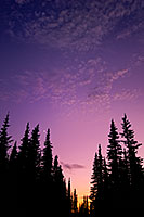 At Hurricane Ridge at Olympic National Park, Washington the crescent moon rose out of a beautiful sunset above the pine trees. - Pacific Photograph