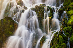 Falling water creates an exquisite pattern on the trail to PJ Lake in Olympic National Park. - Pacific Photograph