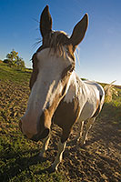 Wide-Angle treatment of a friendly horse. - Nebraska Photograph