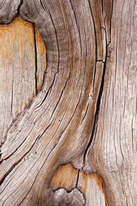 An abstract pattern in a tree trunk on near the top of Mt. Washburn in Yellowstone National Park in Wyoming. - Wyoming Landscape Photograph