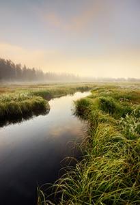 A stream quietly flows through a meadow as the last of the morning fog is burned off from the rising sun. - Wyoming Landscape Photograph