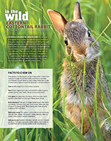 Eastern Cottontail Nebraska Life Article - May/June 2016.  Contributed photography. - Tear Sheet Photograph