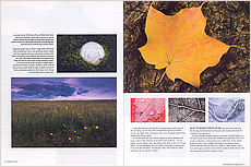Nature's Design Story in Nebraska Life.  Contributed both text and photography. - Tear Sheet Photograph